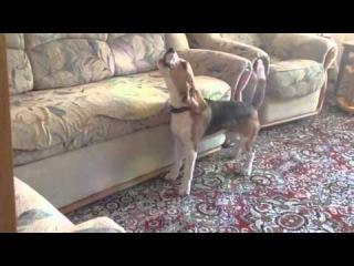 Garvix - лай собаки, крутая музыка, прикол с животными, собачка поет.