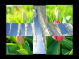 Продолжаем весеннее настроение на позитиве - с колбасингом от гр.Русский Размер! - Новая Весна!