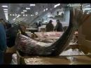 Как делают  свежую рыбу для суши