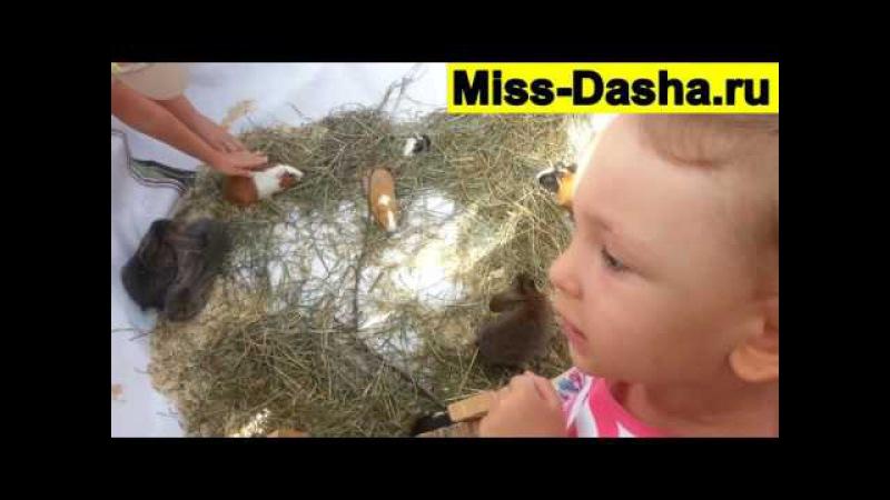 Мисс Даша на празднике. Экспозиции из цветов, рисуем и развлекаемся. Miss Dasha on a holiday.
