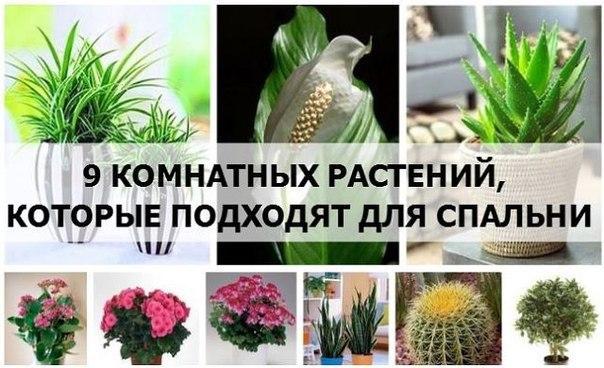 https://pp.vk.me/c630631/v630631025/33ef2/kqC8DNiL-x4.jpg