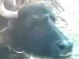 Лезги прикол Им жвачка яяя)) Стиморол Лезгинский прикол