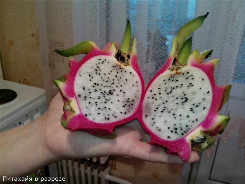 какой экзотический фрукт можно вырастить в квартире можно