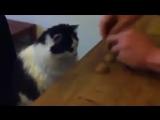 Кручу - верчу, кота запутать хочу!