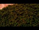 Как приготовить Иван чай. КОпорский чай, ферментированный личный способ и опыт