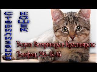 Операция. Стерилизация кошки Ветеринар в Красноярске и в Емельяновском районе Красноярского края