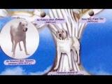 туркменский волкодав.480.mp4