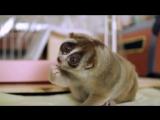 Лори - самое милое животное в мире)
