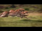 Африканские кошки Королевство смелых African Cats(2011) Jordin Sparks The World I Knew