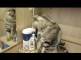 Кот чистит зубы. Смешной кот Василек - чистюля