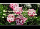 Алёнин сад ✿ Многоярусная посадка на выгонку луковичных✿ Forcing bulbs