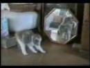 Корочные кошки