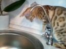 рада пытается попить воду