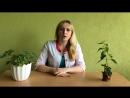 Відео ботаніка Родина глухокропивні яснотковые