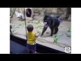 Случай в зоопарке. Смешная обезьяна и забавный малыш