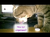 Телепат под музыку Детские песн - Смешная песенка про кота, с неожиданным финалом))). Picrolla