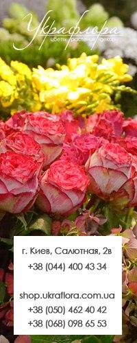 Цветы оптом киев салютная, заказать букет цветов в перми