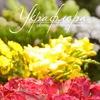 УКРАФЛОРА™ доставка цветов, растения, декор Киев