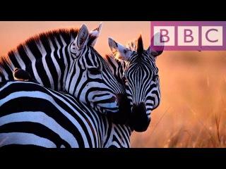 Природа Дикой Африки Документальные фильмы ( Природа, животные, BBC )