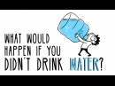 What would happen if you didn't drink water Mia Nacamulli