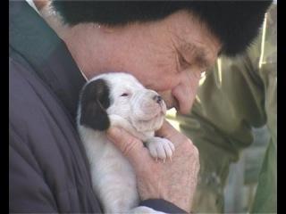 В начале мая в Шадринске испытают гончих собак.