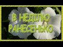 Українські пісні про кохання. В неділю ранесенько