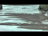 Elizabeth Fraser - Underwater