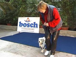 Воспитание щенка - дрессировка собак дома с нуля