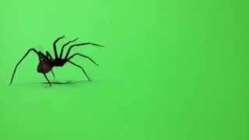 Паук футаж green screen