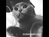 Dubsmash кот мишка