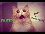 Коты против огурцов | Cats vs cucumbers 2015 Part 3