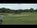 Гигантский аллигатор на поле для гольфа.