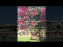 «Отель Атлантик. Кипр.» под музыку Gipsy Kings - Volare (воларе!! оо! кантаре оооо!!). Picrolla
