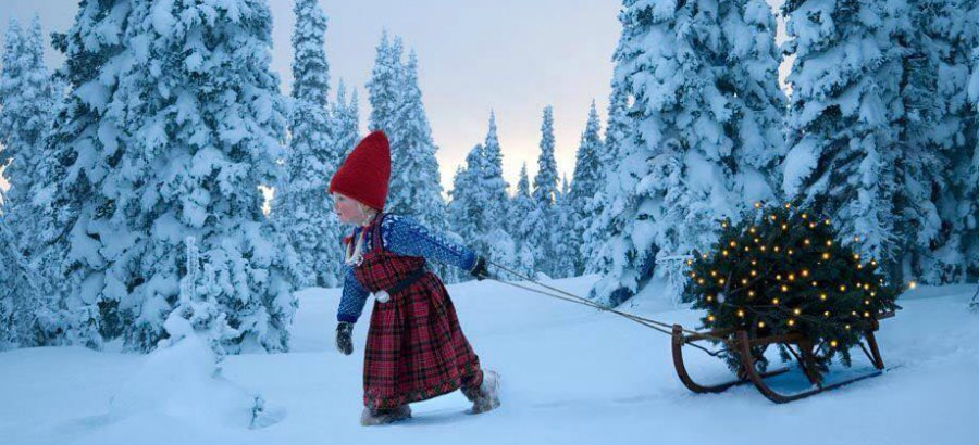 Как студенту загадать новогоднее желание или на Деда Мороза надейся, а сам не плошай!
