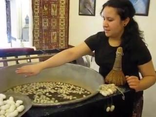 Как извлекают шелковую нить из коконов тутового шелкопряда