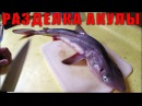 Разделка Акулы Катран Dogfish Shark Cleaning