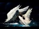 Олег Акулов Два белых лебедя