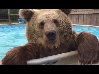 Невероятные животные 8! Медведь в бассейне