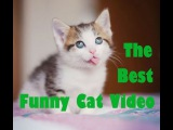 Funny Cat & Cute Kittens Fail Videos   The Best Funny Kitty Cat Video № 25   |  Morsomme Katter № 25