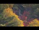 Эрнесто Кортазар — Осенняя роза — Ernesto Cortazar — Autumn Rose(1)