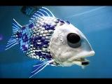 Искусственная рыба.Куда пропала рыба естественного происхождения и что мы едим?Тайны Чапман