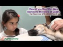 Rescuing a Dog Who Was Starved to the Brink of Death Her Recovery Will AMAZE You Please Share
