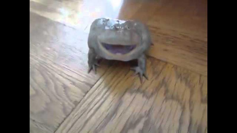 лягушка издает душераздирающий звук