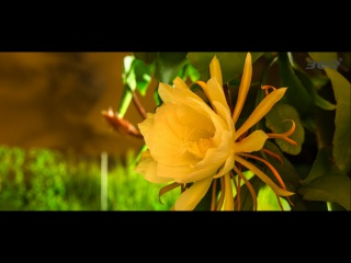 Гваделупа. Самое красивое видео. 4k Ultra HD