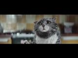 Кошачья сказка к Рождеству;))