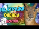 На страже Оленей монтаж Морган Труман АняМяу Андрей Бенедикт Руди