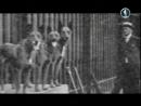 Планета собак – Бельгийская овчарка. Грюнендаль