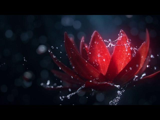 CGI Animated Spot HD Bloom Spot by Josh Clos, Romain Faure, Cristina Barna