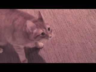 how to train persian cat for toilet