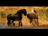 Максим Леонидов - Конь videoHD